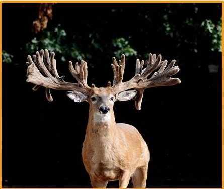 WHITETAIL PRODUCTS